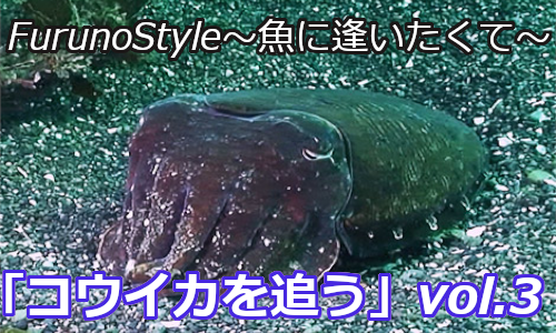 フルノスタイル~魚に逢いたくて~NEW!!『コウイカを追うvol.3』