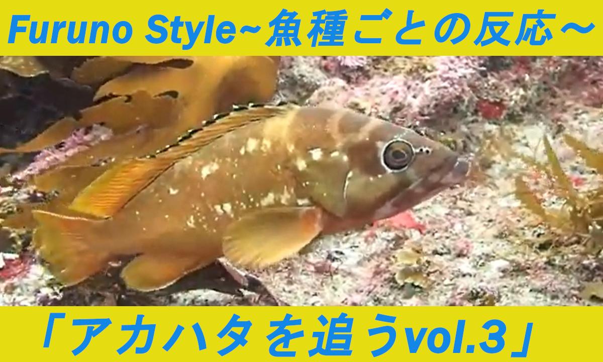 NEW! フルノスタイル~魚に逢いたくて~「アカハタを追うvol.3」